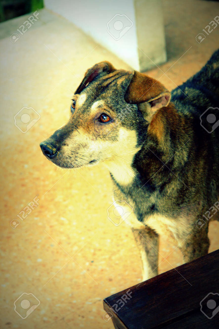 Stray dog living alone Stock Photo - 23264776