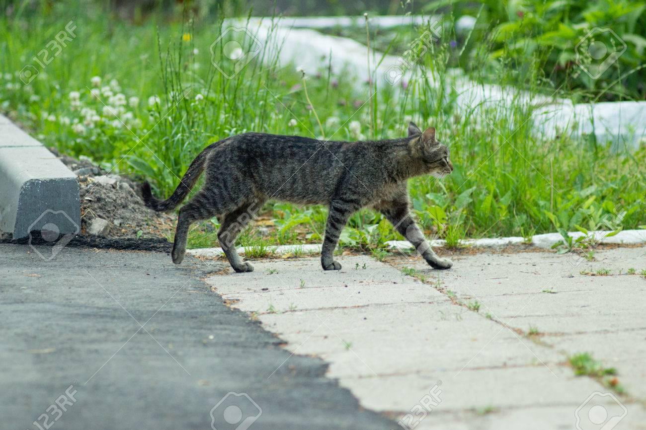 Gatti Selvatici Domestici