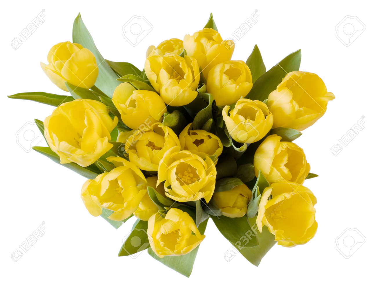 A bunch of yellow tulips on white Stock Photo - 2522698
