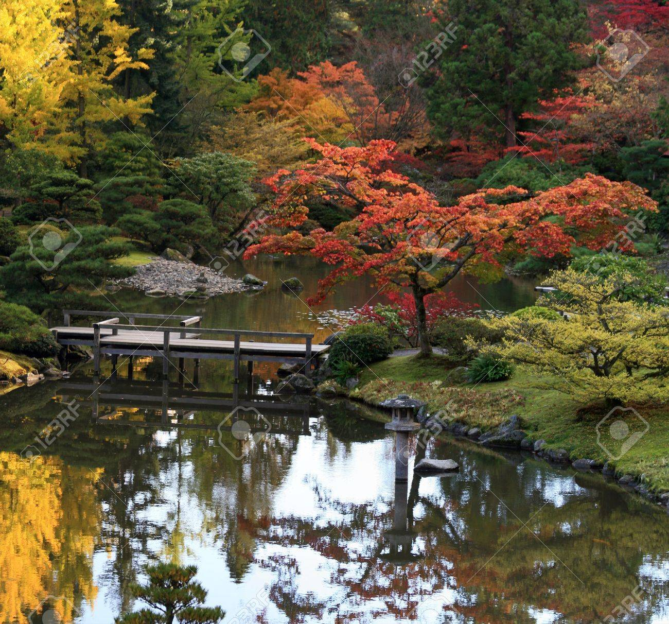 View of reflecting  pond in the foreground, footbridge center and background of Japanese Maples in autumn colors. Japanese Garden,Washington Park Arboretum,Seattle. Stock Photo - 11716189