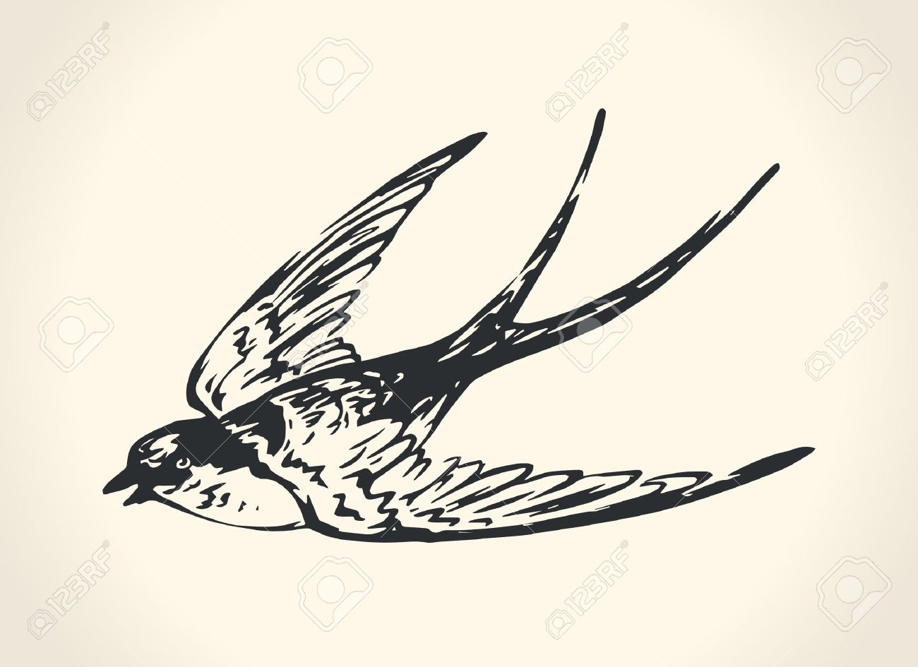 Set of sketches of flying swallows stock vector illustration - Swallow Vintage Illustration Of Swallow Illustration