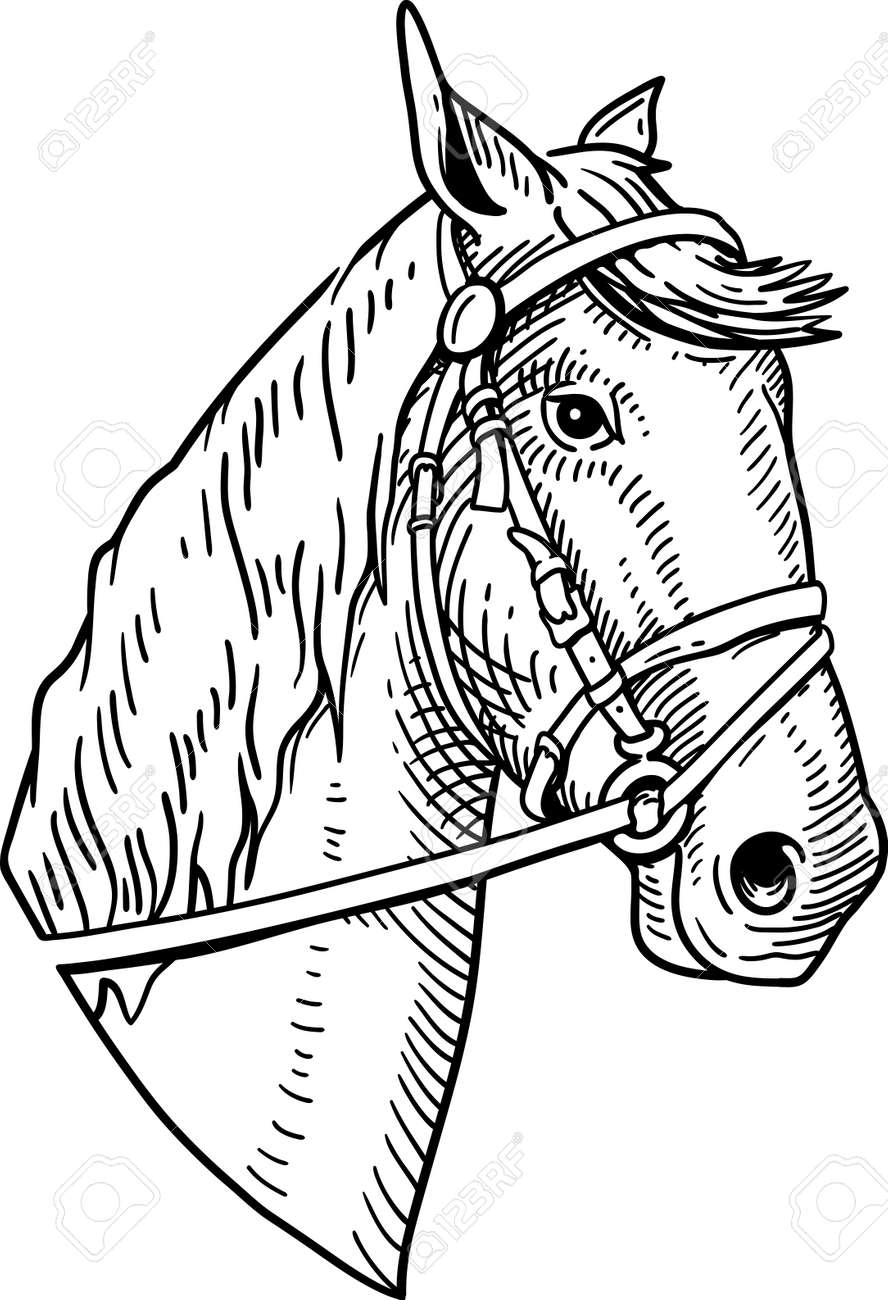 Horse Head Vintage Illustration On White Background Royalty Free Cliparts Vectors And Stock Illustration Image 61045898
