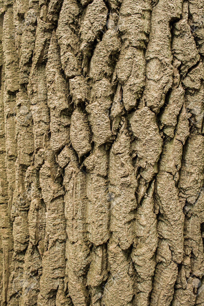 rough surface bark of willow Stock Photo - 20671430