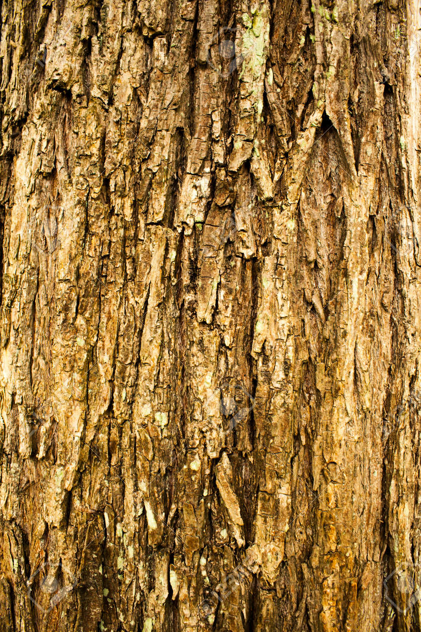 rough surface bark of willow Stock Photo - 20671442