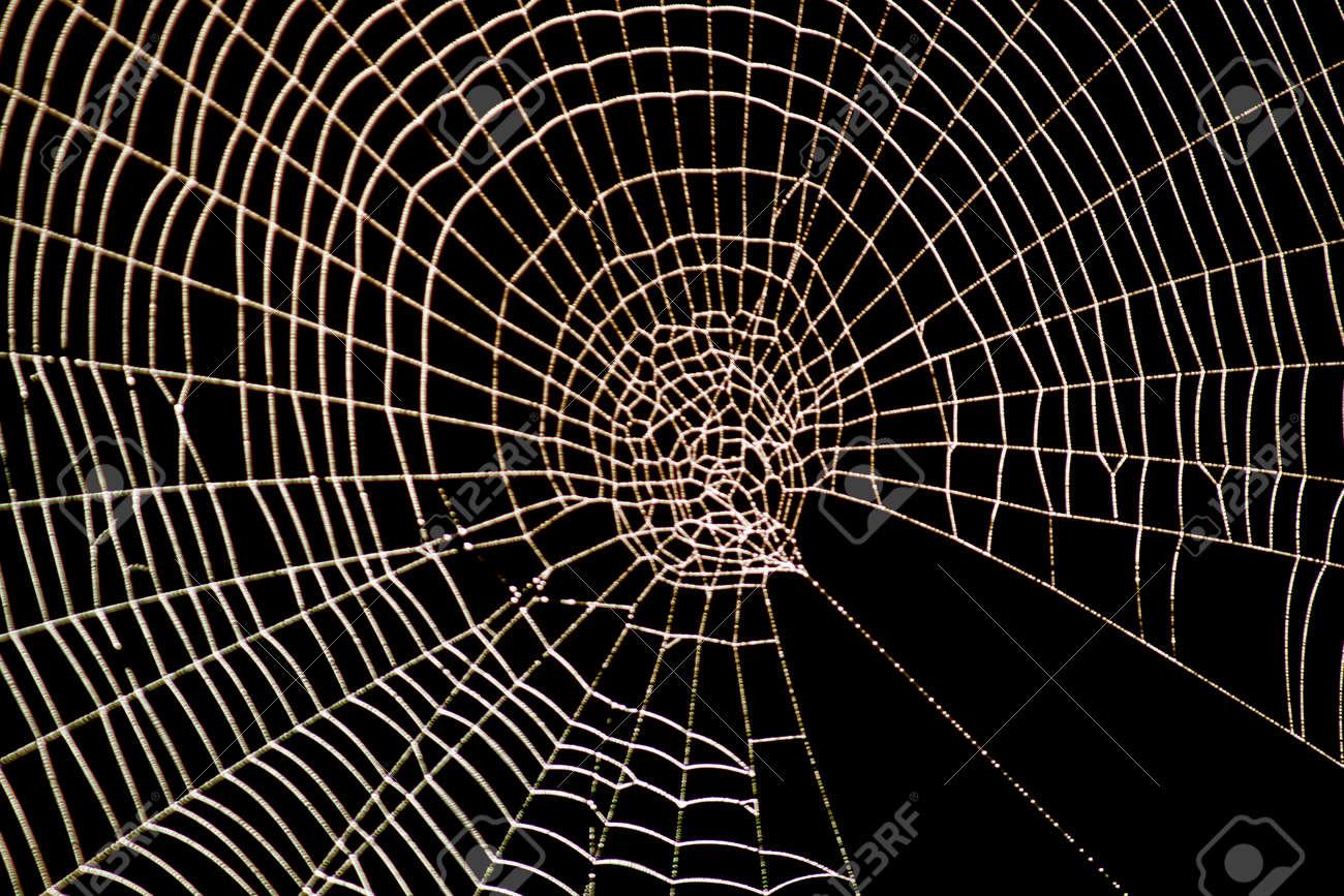 spiderweb spider web pattern for halloween scary spiderweb stock photo - Spider Web Halloween