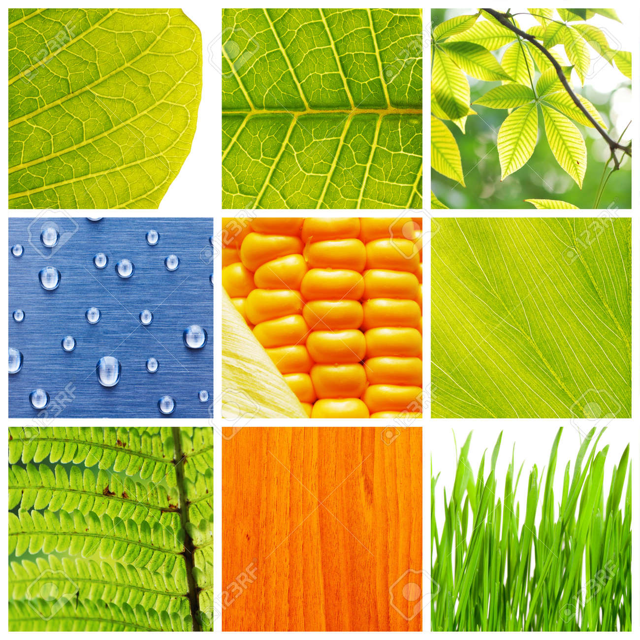 Collage made of different nature backgrounds Stock Photo - 5054037
