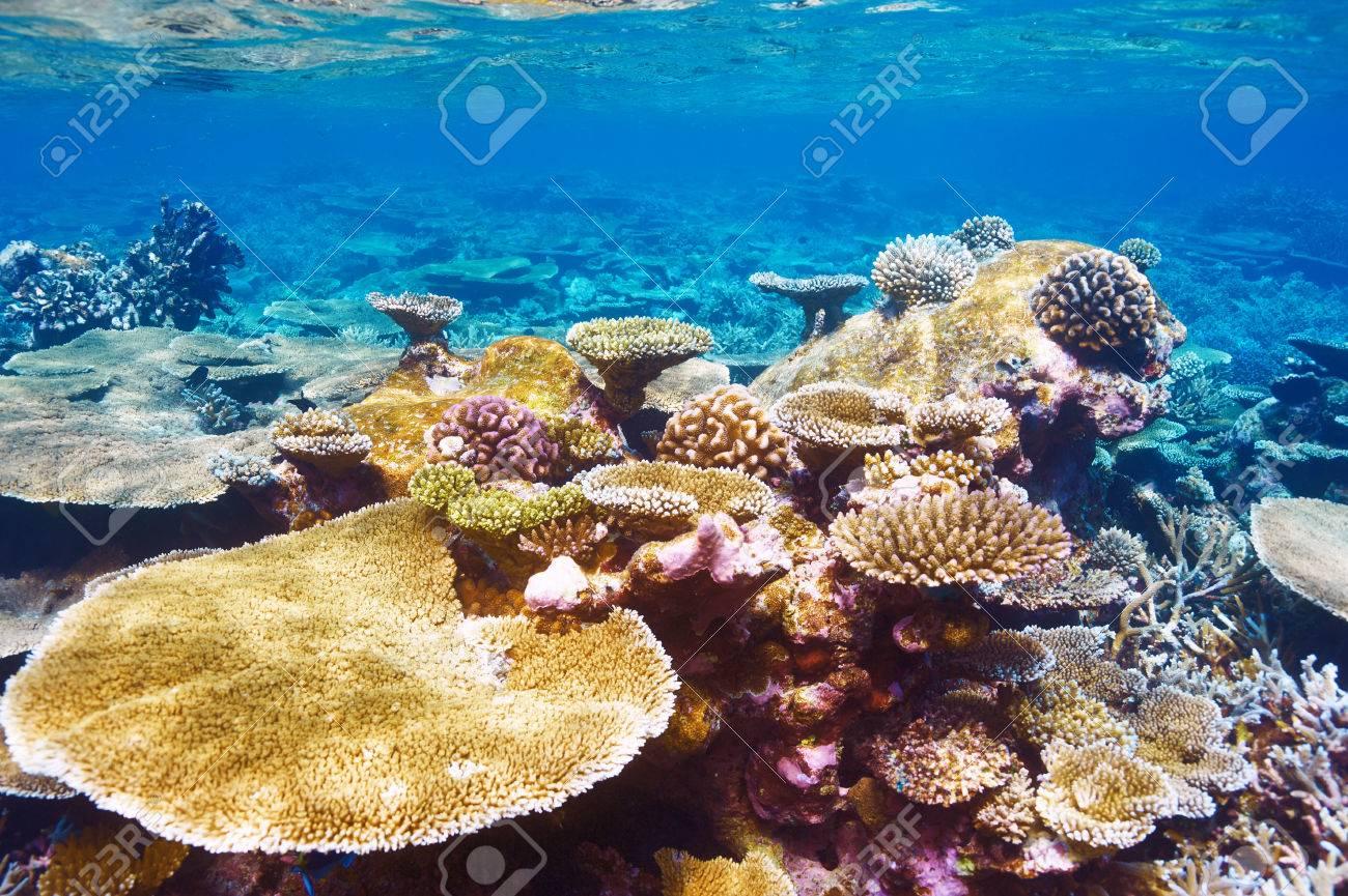Coral reef at South Ari Atoll, Maldives Stock Photo - 26770737