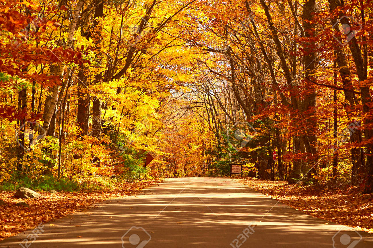 Autumn scene with road in forest - 43267402