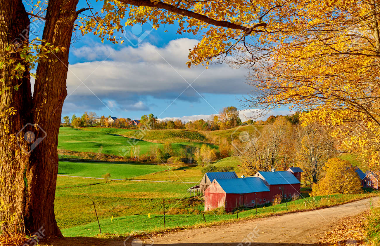 Jenne Farm with barn at sunny autumn morning in Vermont, USA - 128258650