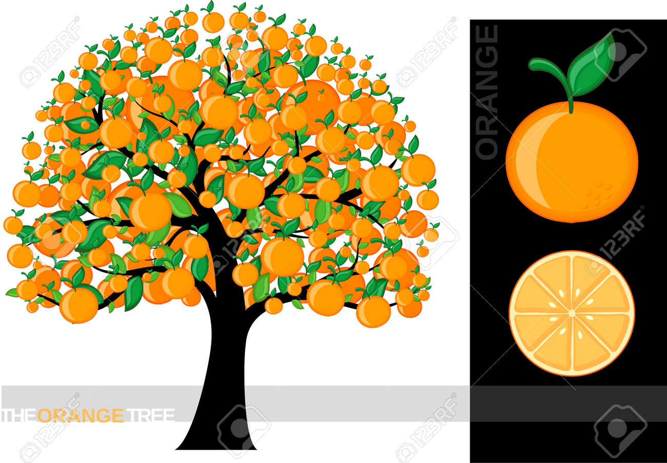 白い背景と 非常に有用ないくつかの概念のために分離された漫画オレンジ木のイラスト 使用するフォントは のイラスト素材 ベクタ Image