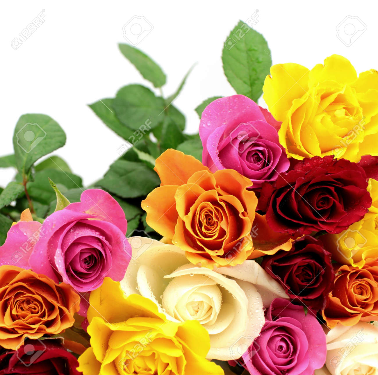 Colorful roses Stock Photo - 14192151