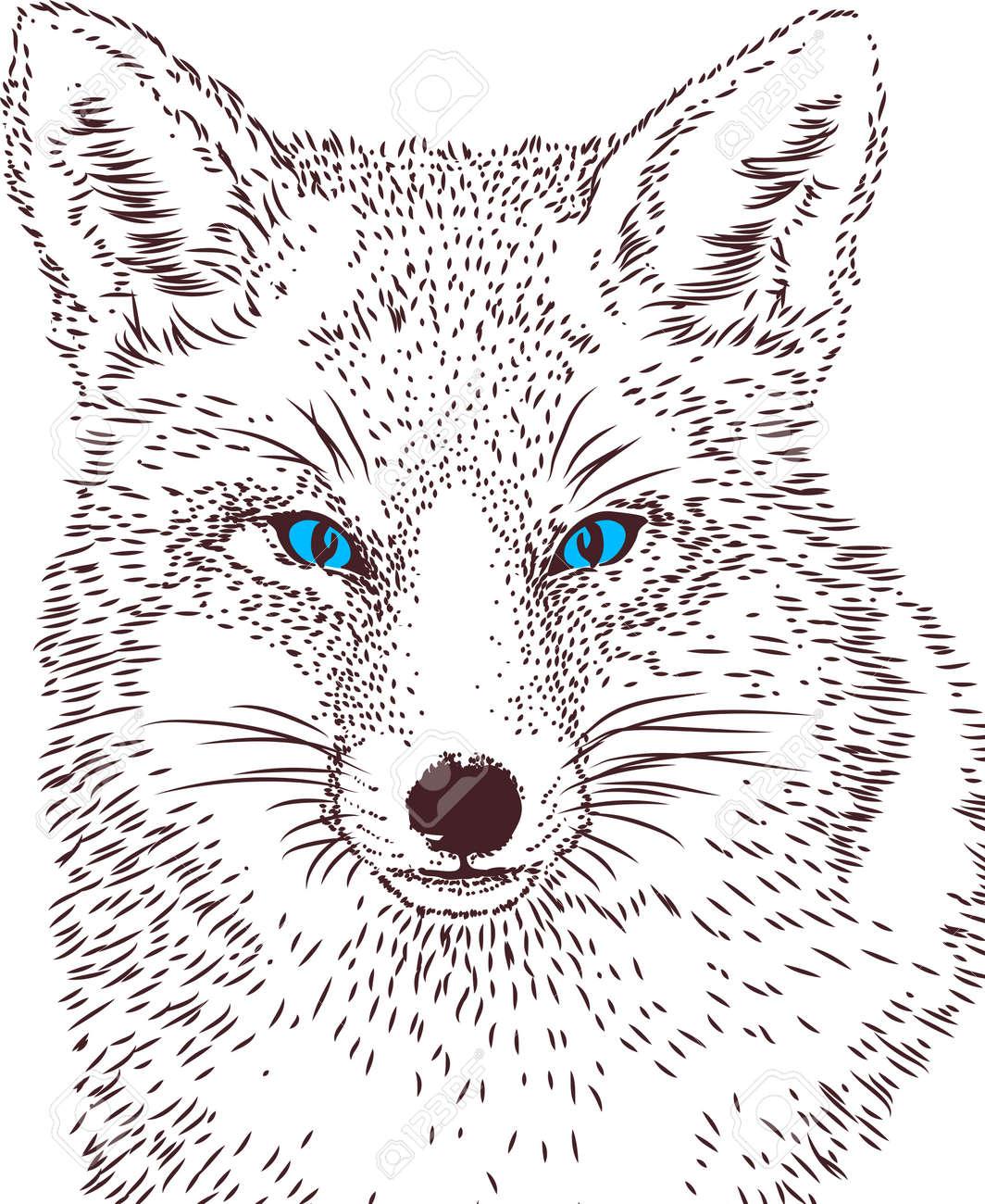Lobos De Dibujo Vectorial Línea Ilustraciones Vectoriales Clip Art