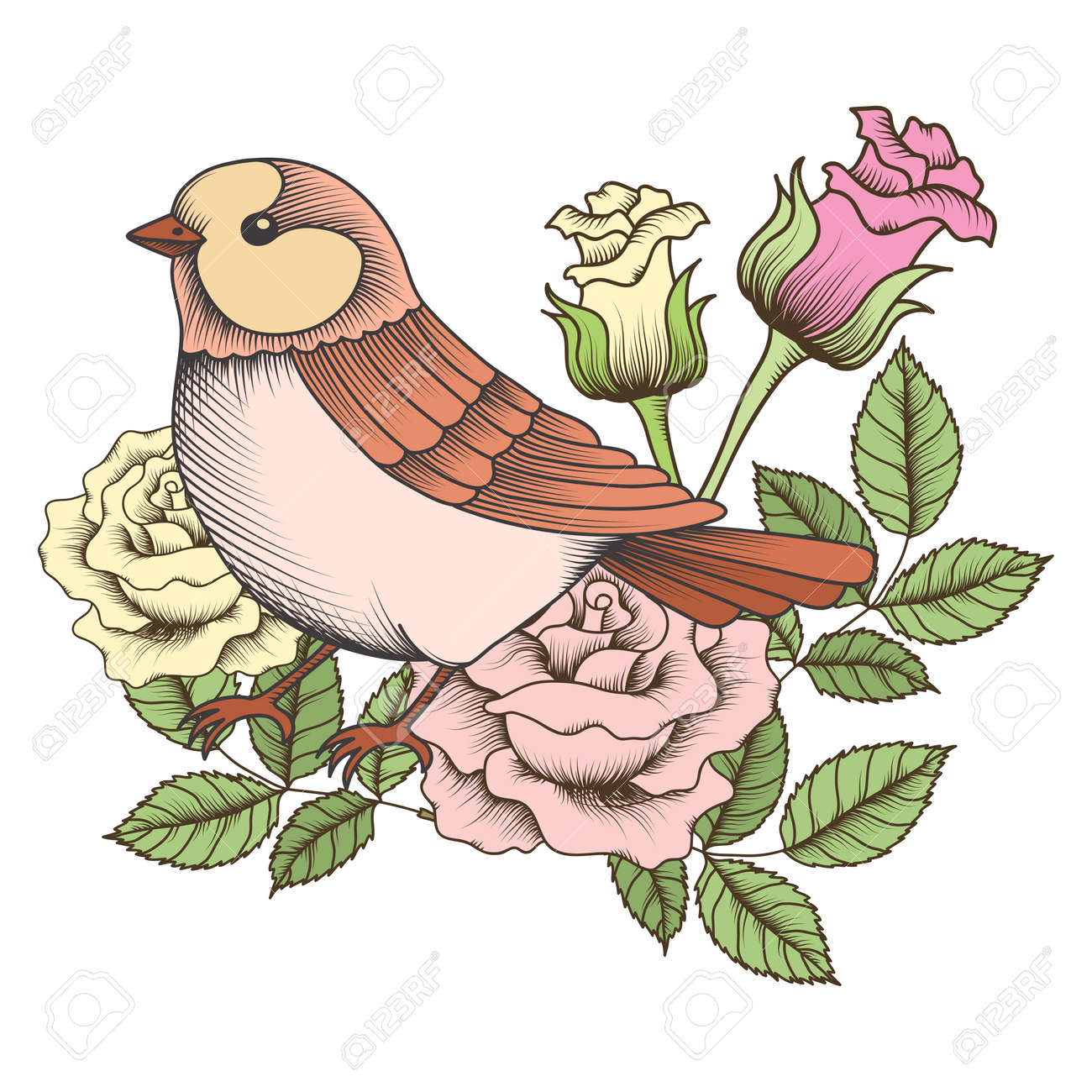 Vector vintage sparrow with rose illustration - 49565922