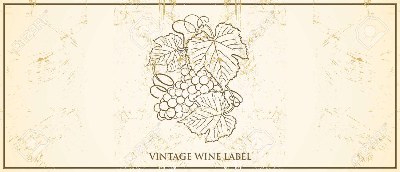 Vector Vintage Wine Bottle Label Template With Classic Grapevine