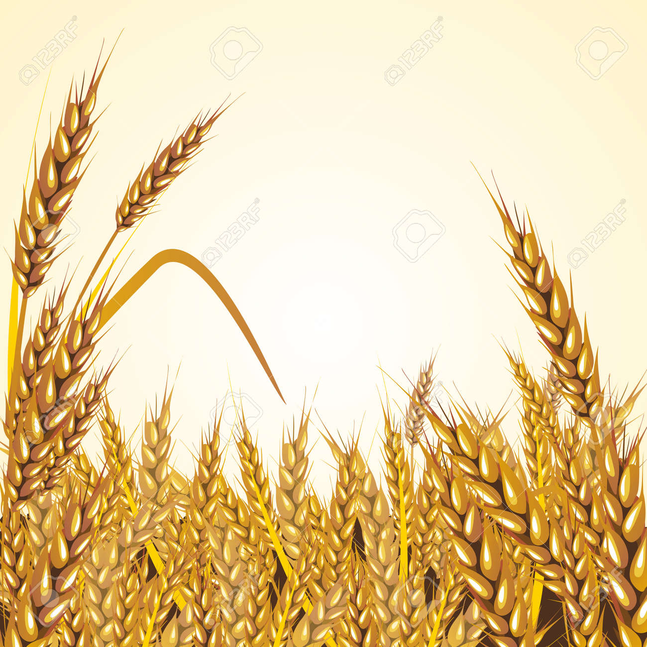 Vector Paddy Grass Closeup Illustration, mature and ready for harvesting - 50019793