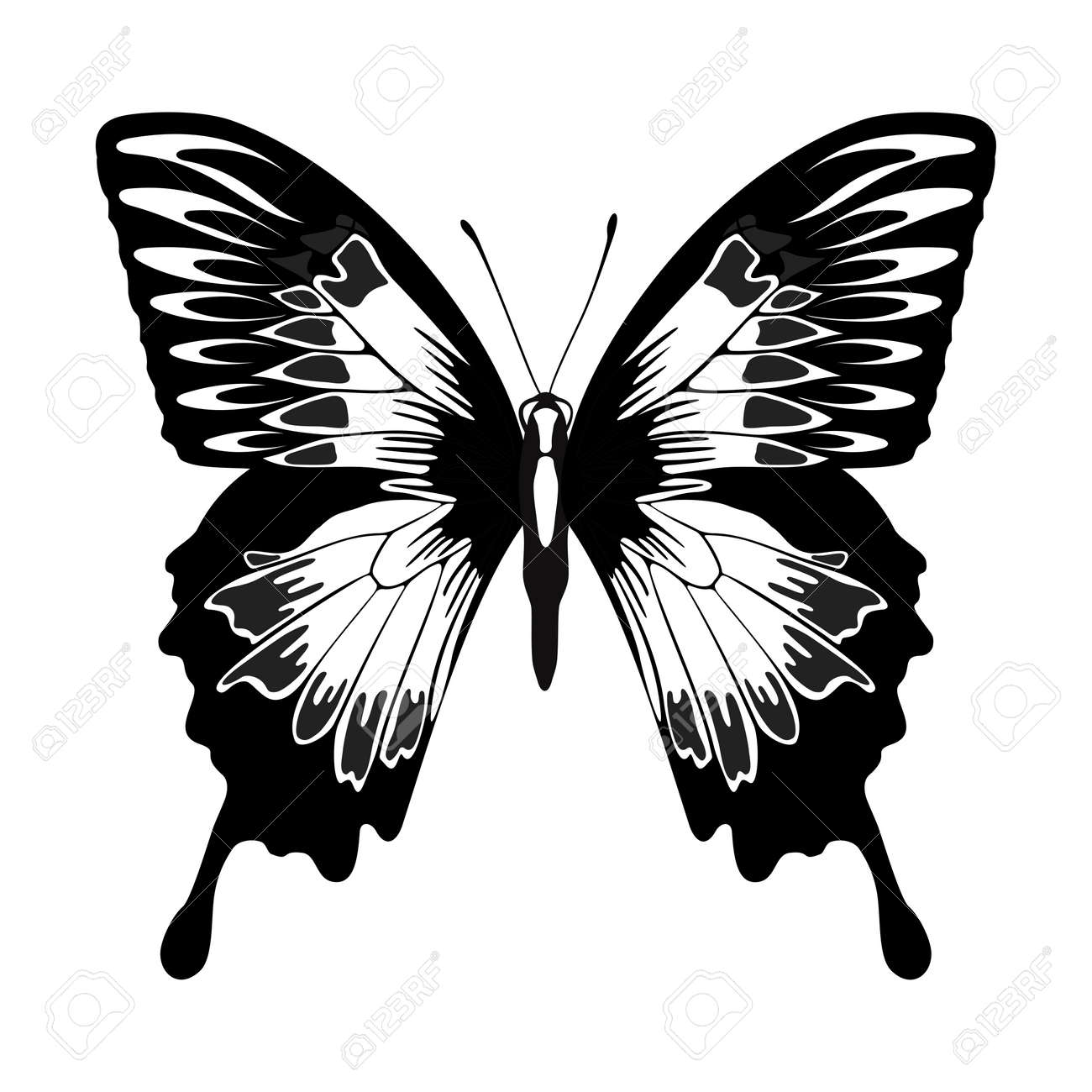 vector monochrome butterfly outline silhouette illustration