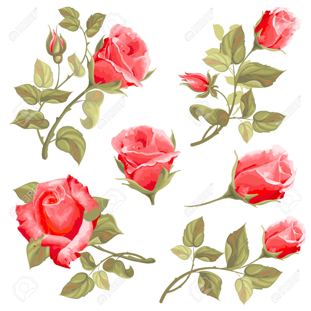 Vector Vintage Rose Illustration Graphic Element Collection Isolated