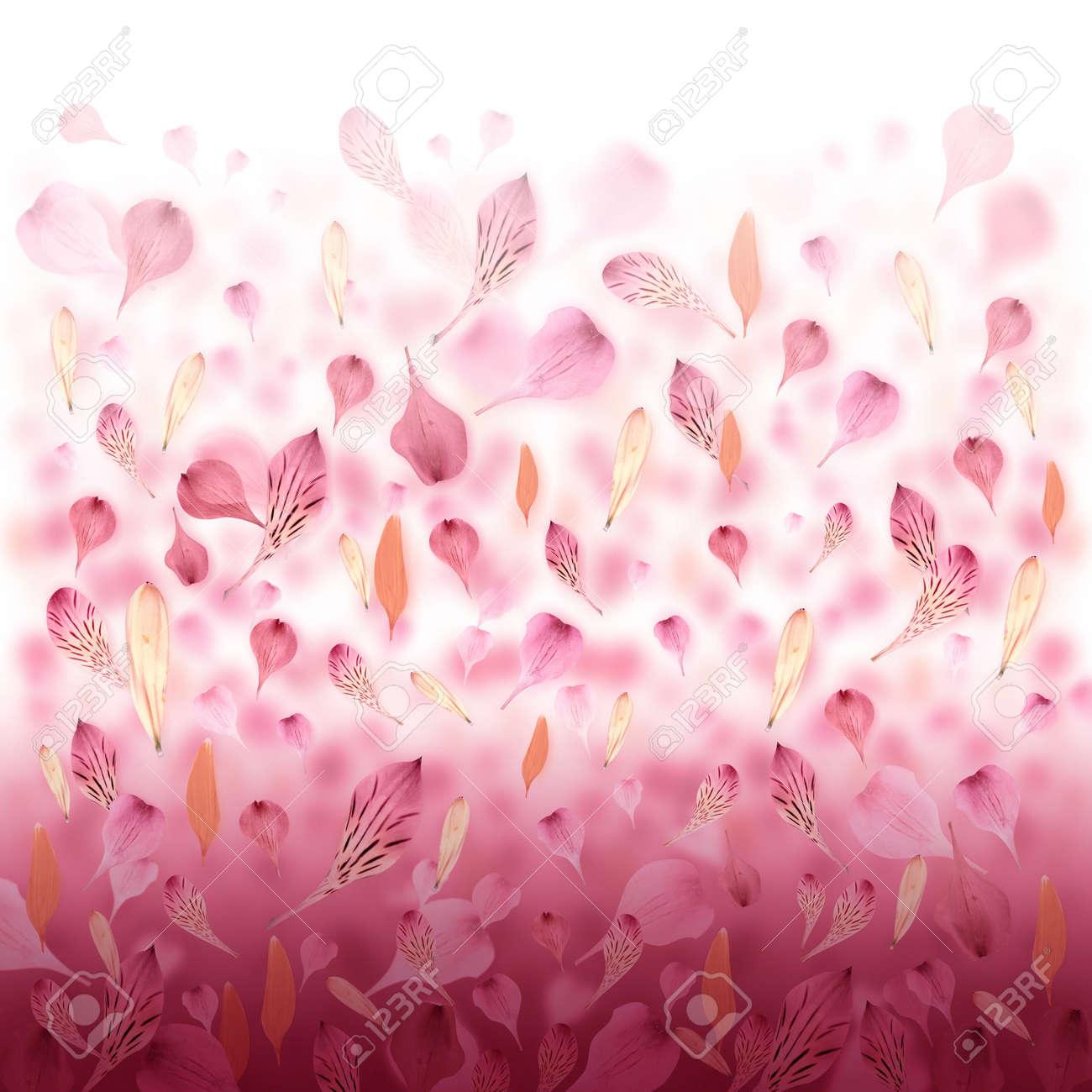 Pétalos De Flores De Color Rosa Y Rojo Están Cayendo De Crear Un