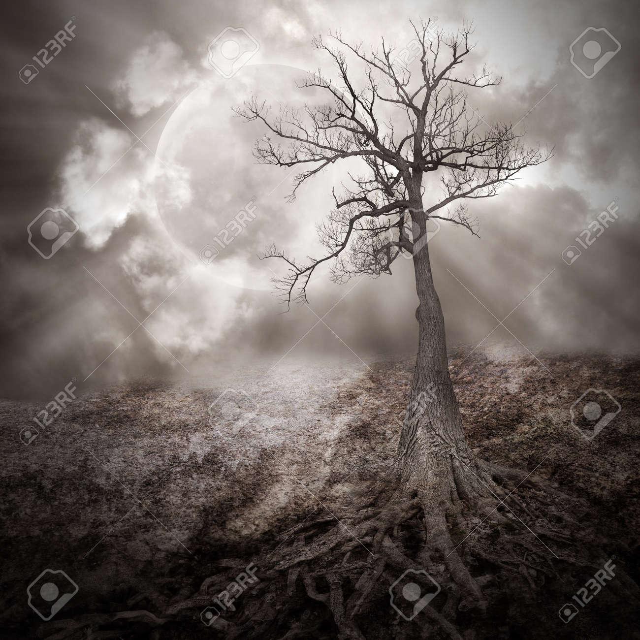 Favori Un Albero Buio è Sola Nel Bosco Con Grandi Radici Che Crescono Su  YG01