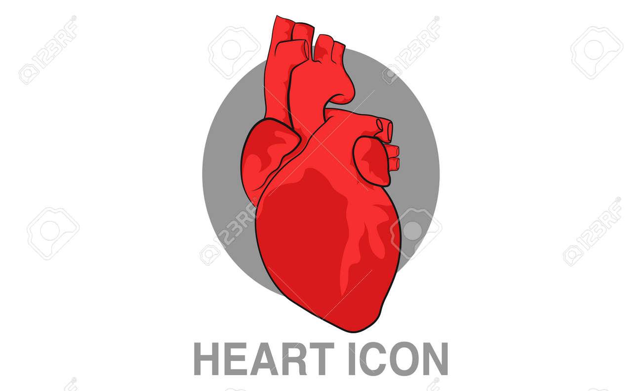 Realistic human heart icon  Clip-art vector illustration
