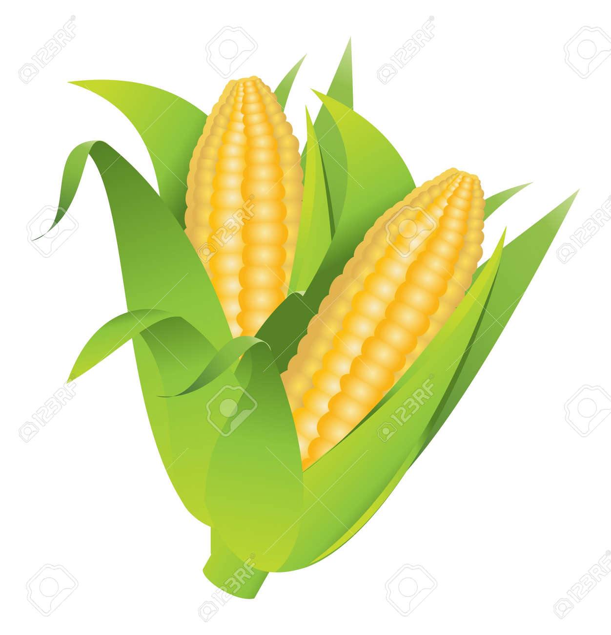 7 050 sweet corn stock illustrations cliparts and royalty free rh 123rf com corn on the cob clip art black and white