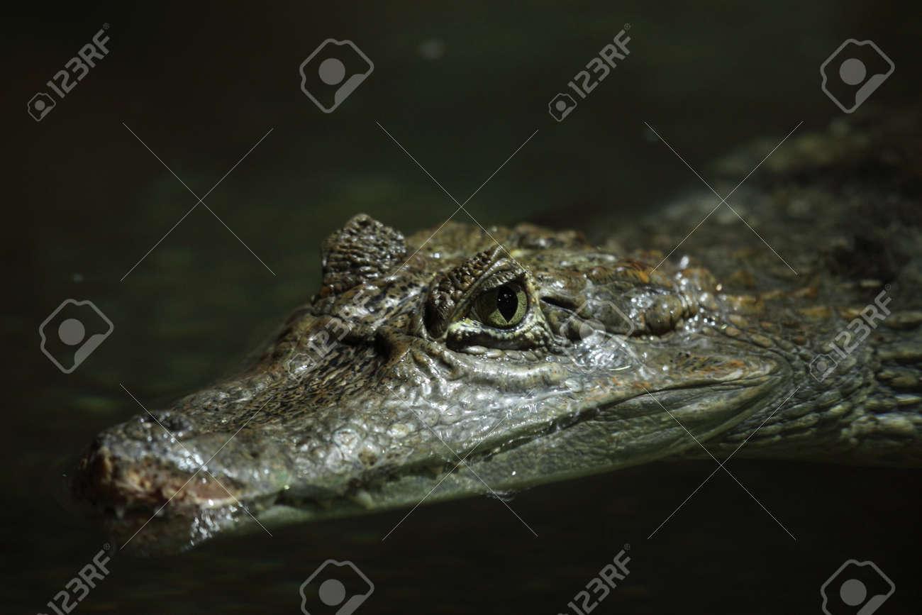 887e27c07ada Crocodile Alligator and Cayman Stock Photo - 36429765
