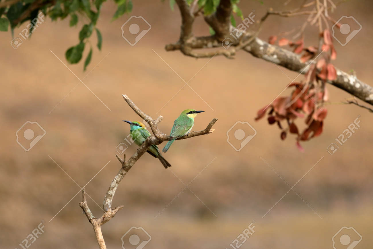 Bee Eater Bird Or Emerald Spint In Sri Lanka Stock Photo Picture And Royalty Free Image Image 93889948 Spintires boasts a quirky new experience every time you play. 123rf com
