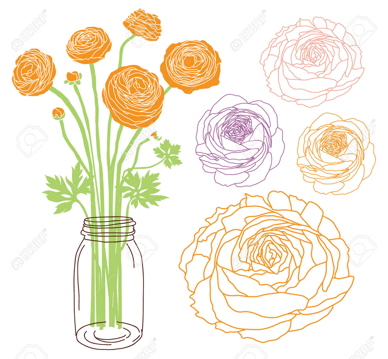 Ranunculus Flower Bouquet In A Jar Royalty Free Cliparts Vectors And Stock Illustration Image 20273703