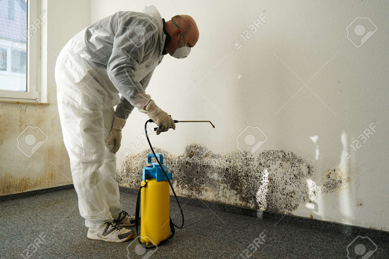 specialist in Combating mold in an apartment - 57670940