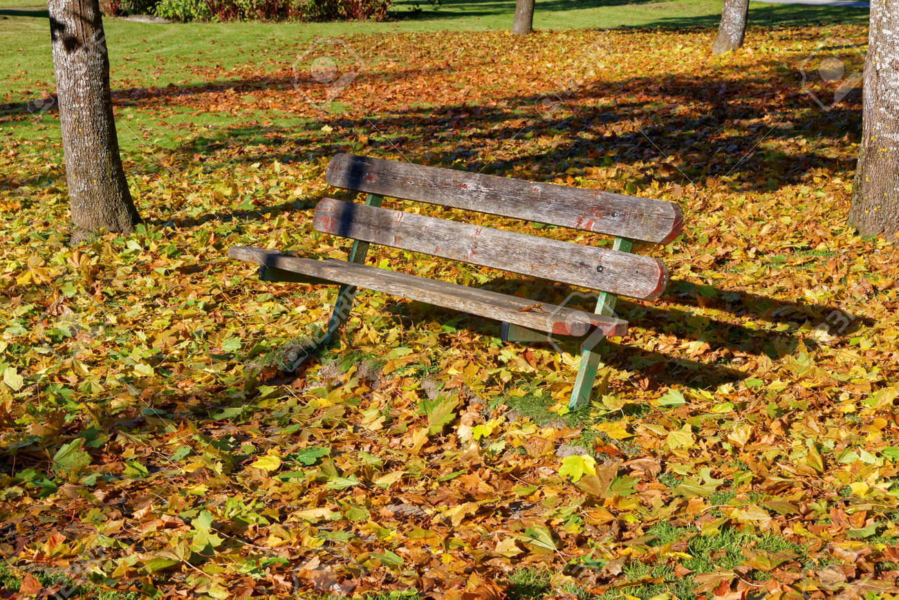 A Garden Seat Surrounded By Colorful Maple Leaves Fallen To Ground ...