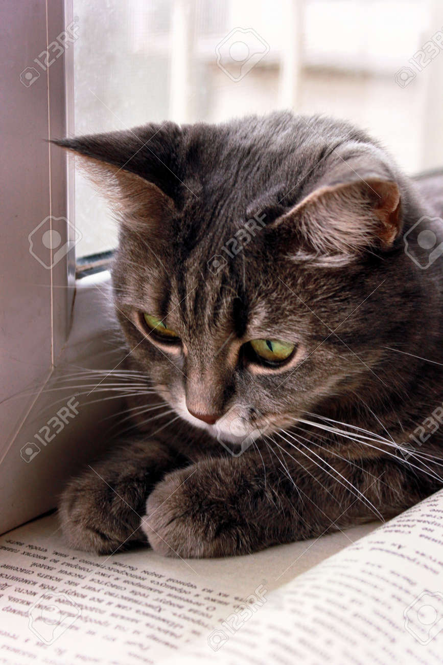 Brown female kitten is at the window and looks into an open book. Close-up. Stock Photo - 18497800