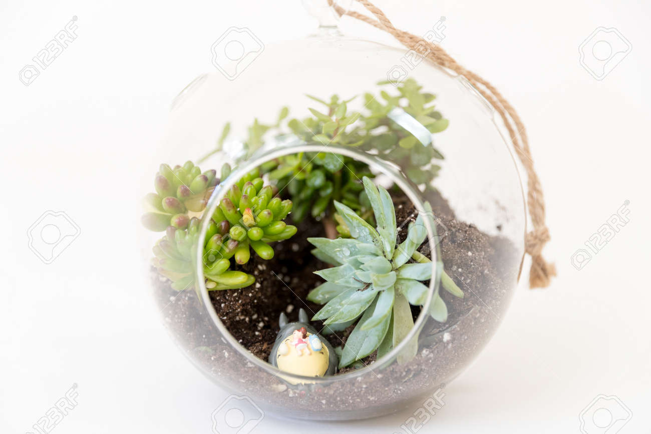 Variety Succulents Round Glass Terrariums Image Stock Photo Picture And Royalty Free Image Image 139438143
