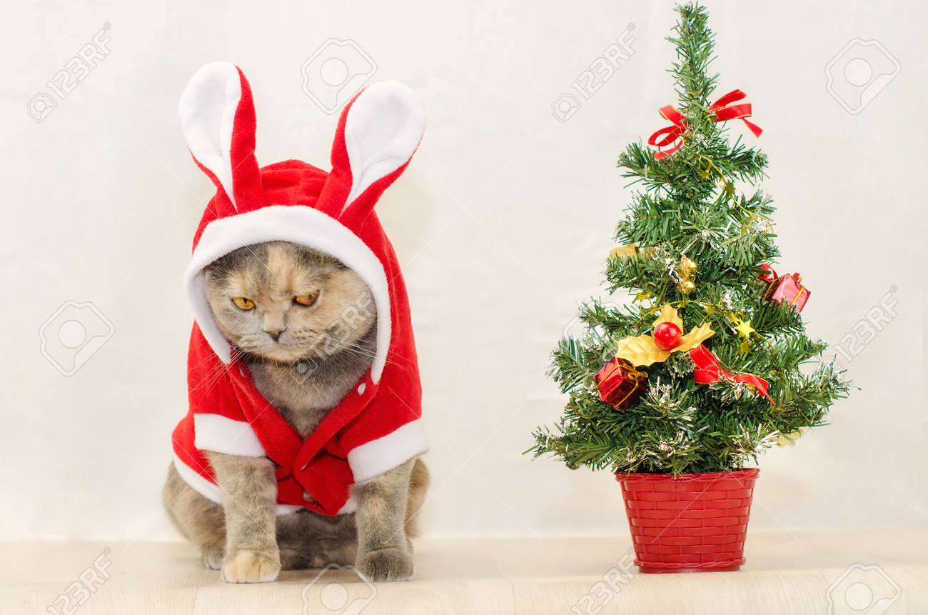 Sad Christmas Cat Dressing Up In Red Rabbit Costume And Sitting ...