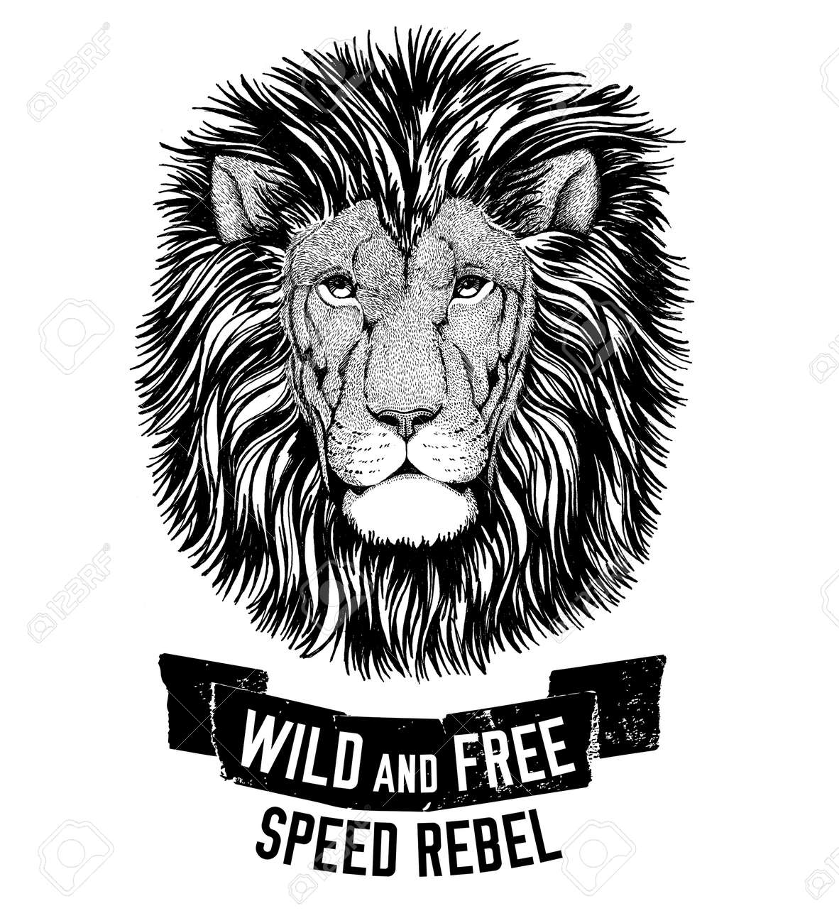 wild lion wild cat be wild and free t shirt emblem template stock