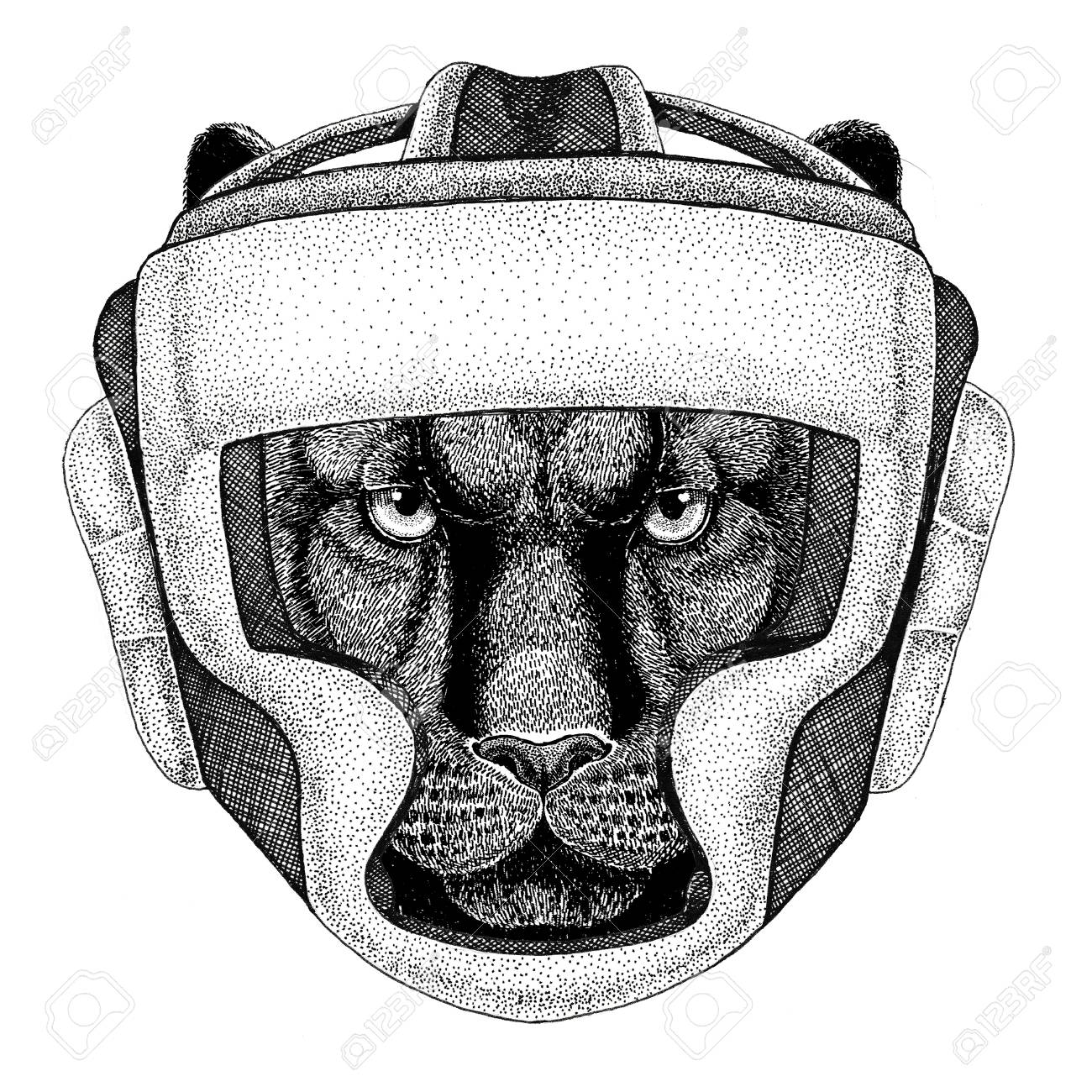 boxer puma cat