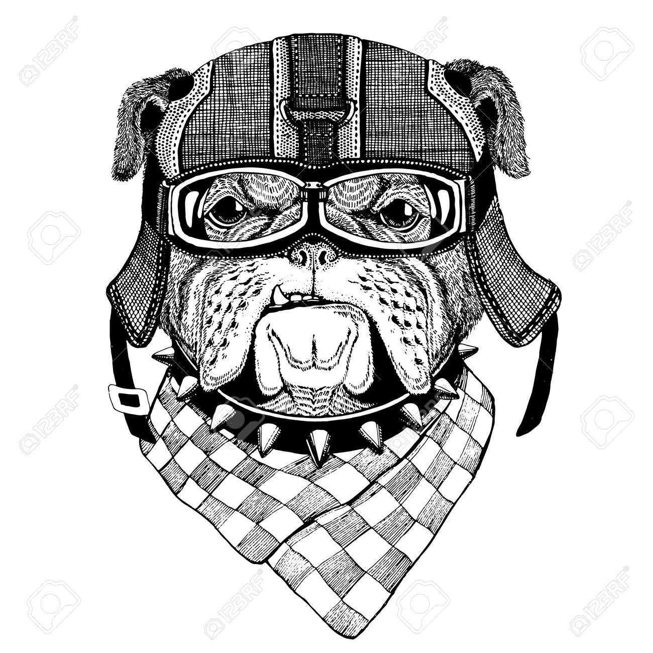 Bulldog Portant Casque De Moto Casque Daviateur Illustration Pour