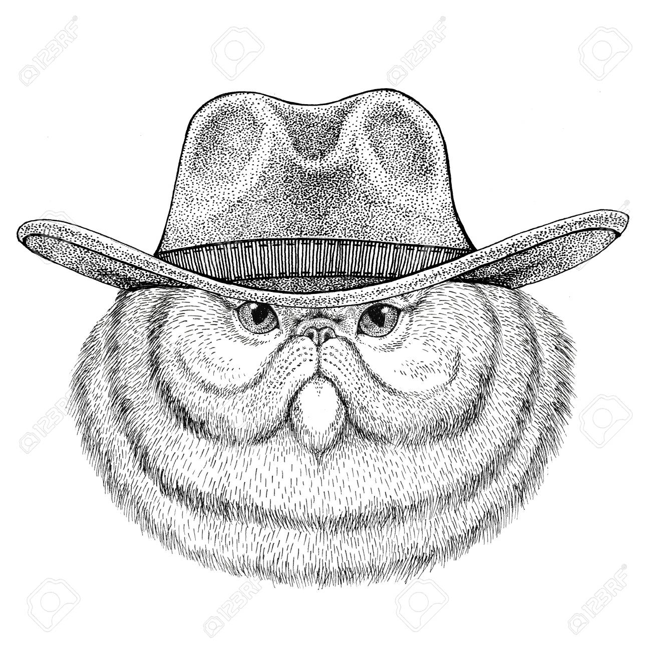 94994546 Portrait of fluffy persian cat Wild animal wearing cowboy hat..
