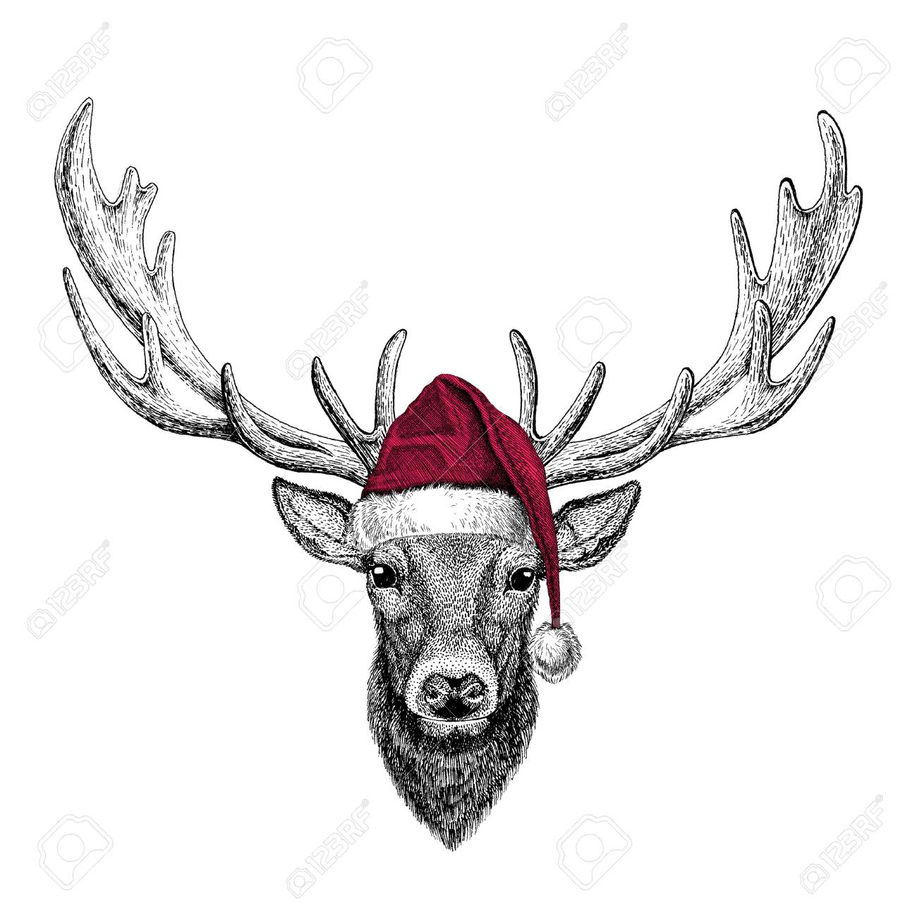 Christmas illustration Wild animal wearing christmas santa claus hat Red winter hat Holiday picture Happy new year - 81961973