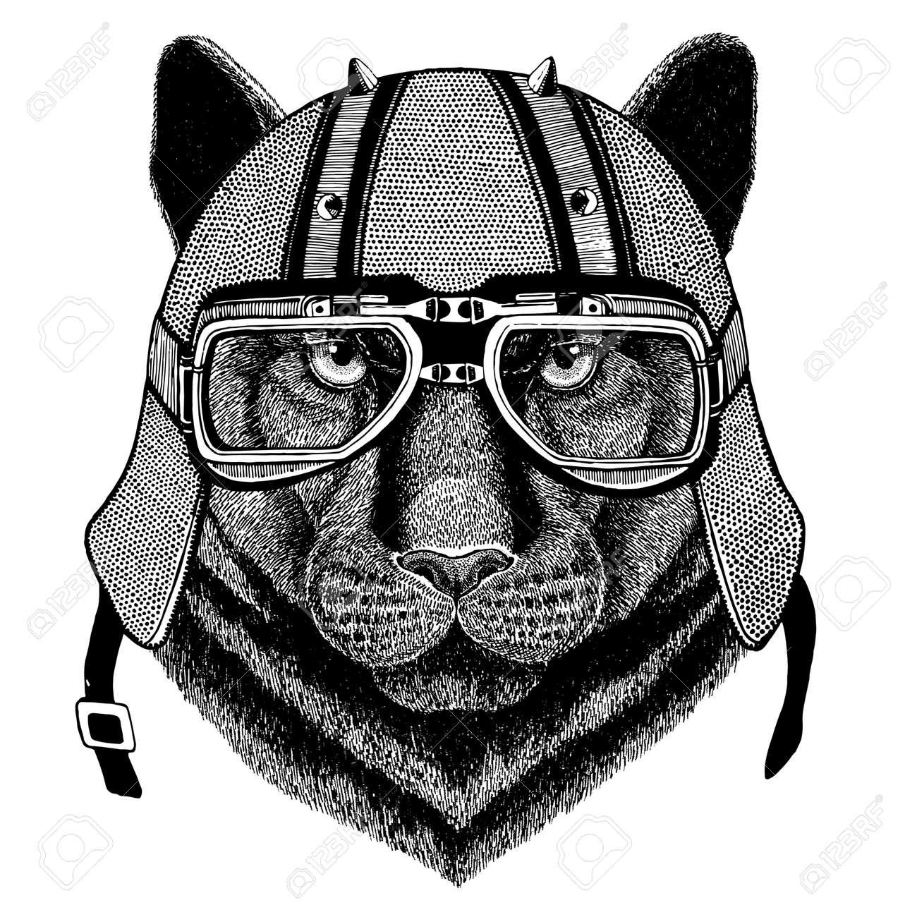 Panthère Puma Cougar Chat Sauvage Portant Un Casque De Motard Animal