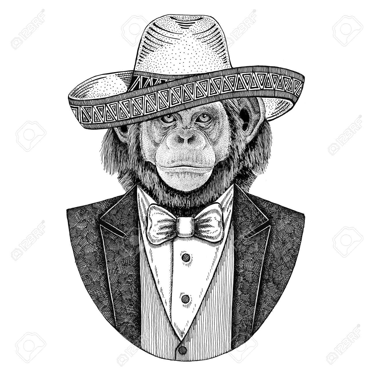 Mono De Chimpancé Animal Salvaje Que Lleva El Sombrero - Sombrero ...