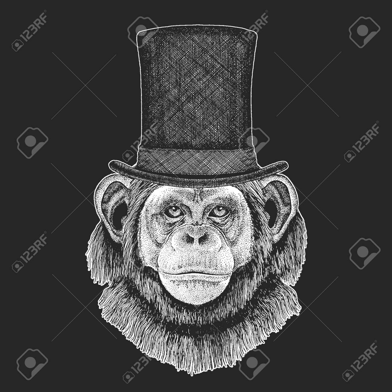 1555d9edf864ad ... clothing. Chimpanzee, Monkey Top hat, cylinder. Hipster animal,  gentleman. Classic headdress.