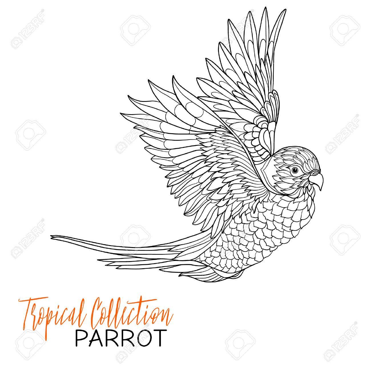 Perroquet Oiseaux Tropicaux Vector Illustration Livre à Colorier Pour Les Adultes Et Les Enfants Plus âgés Coloriage Dessin Au Trait