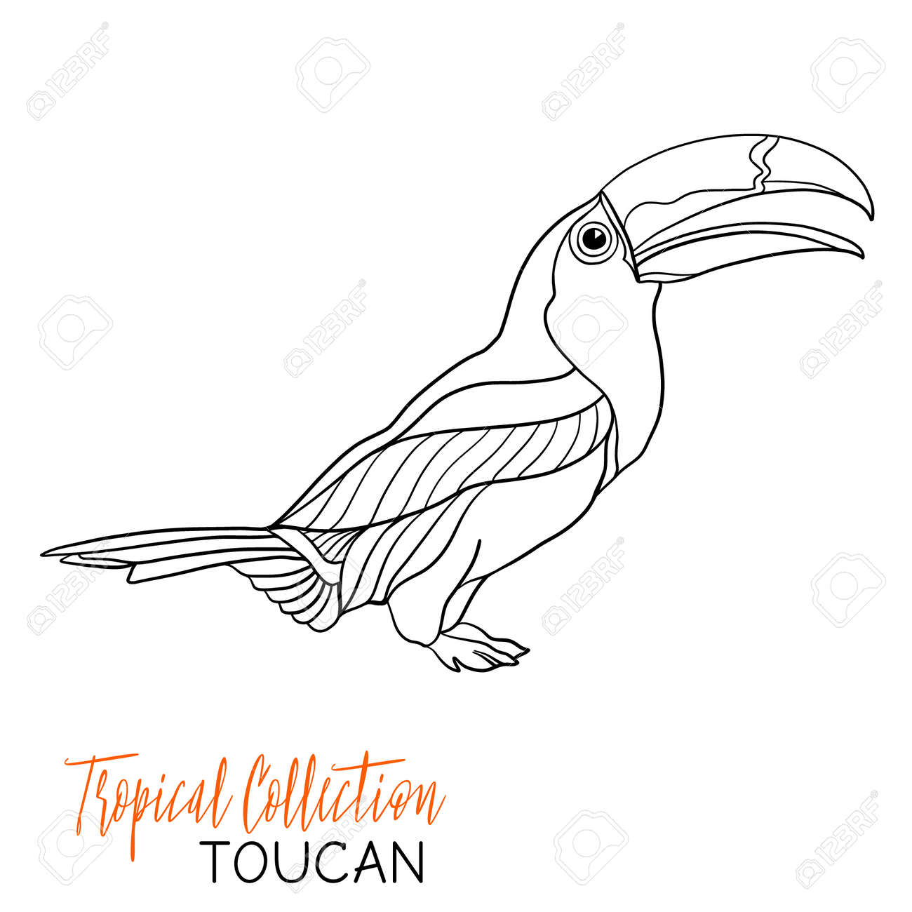 Toucan. Tropical Bird. Vector Illustration. Coloring Book For Adult And  Older Children.