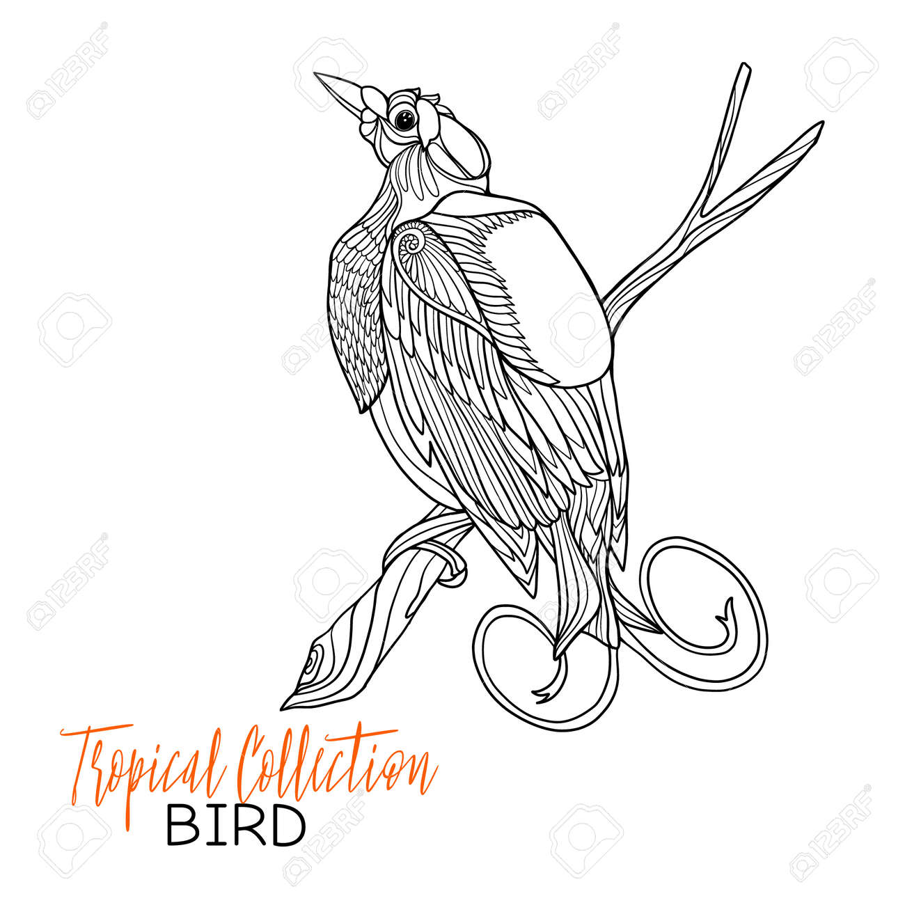 Tropical Bird Vector Illustration Coloring Book For Adult And Older Children Page