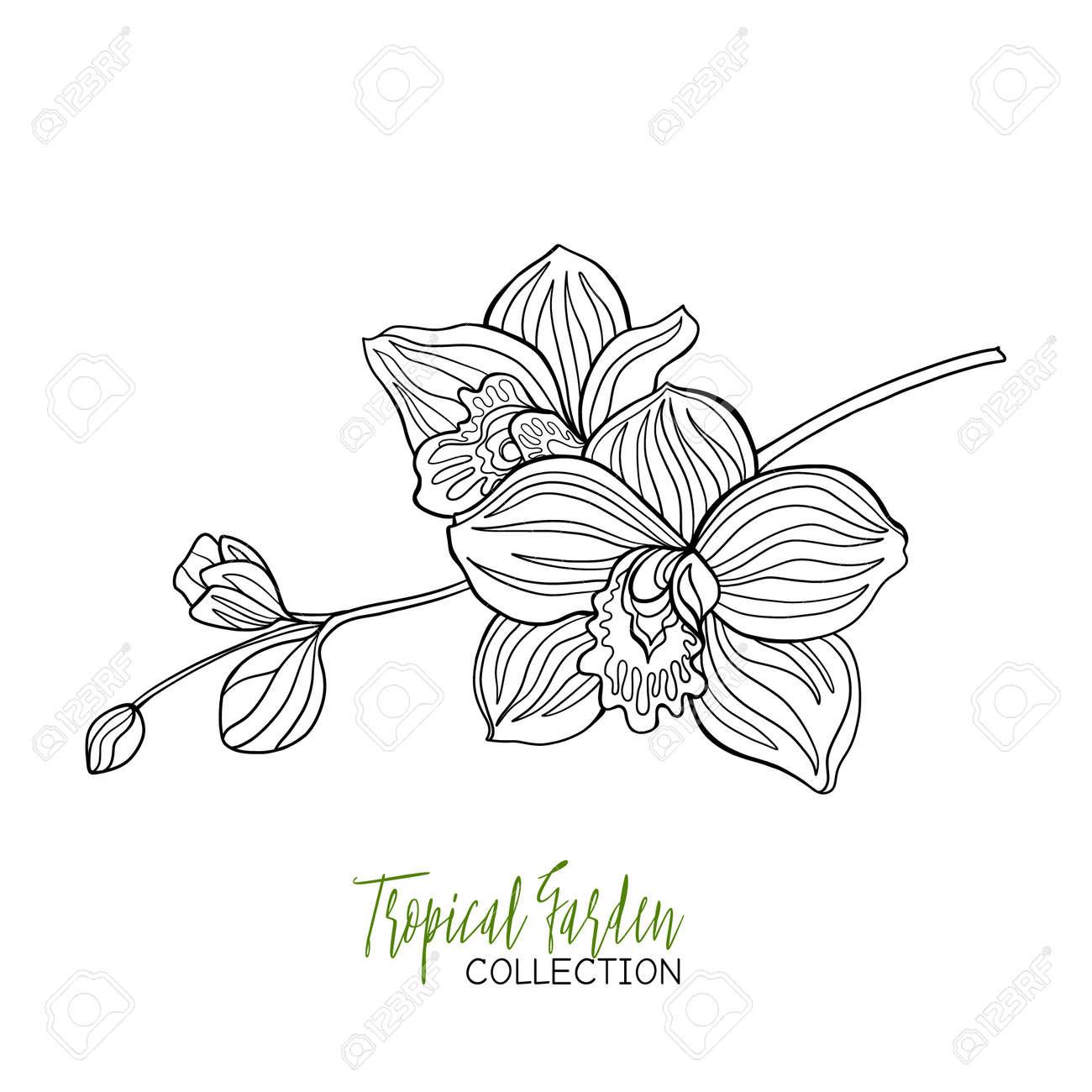 Orchidee Tropische Pflanze Vektor Illustration Malbuch Für