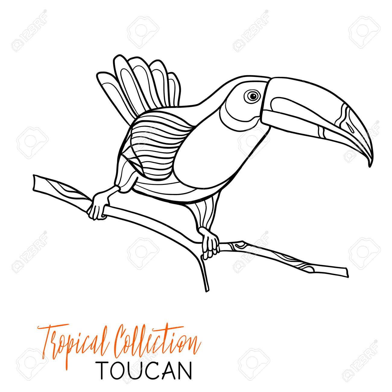 Toucan Oiseaux Tropicaux Vector Illustration Livre à Colorier Pour Les Adultes Et Les Enfants Plus âgés Coloriage Dessin Au Trait