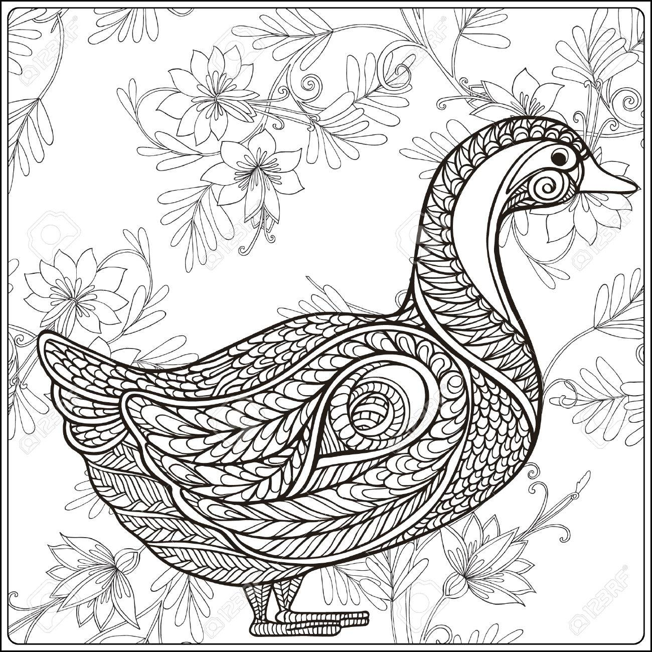 Duck On Floral Background. Coloring Book For Adult And Older ...