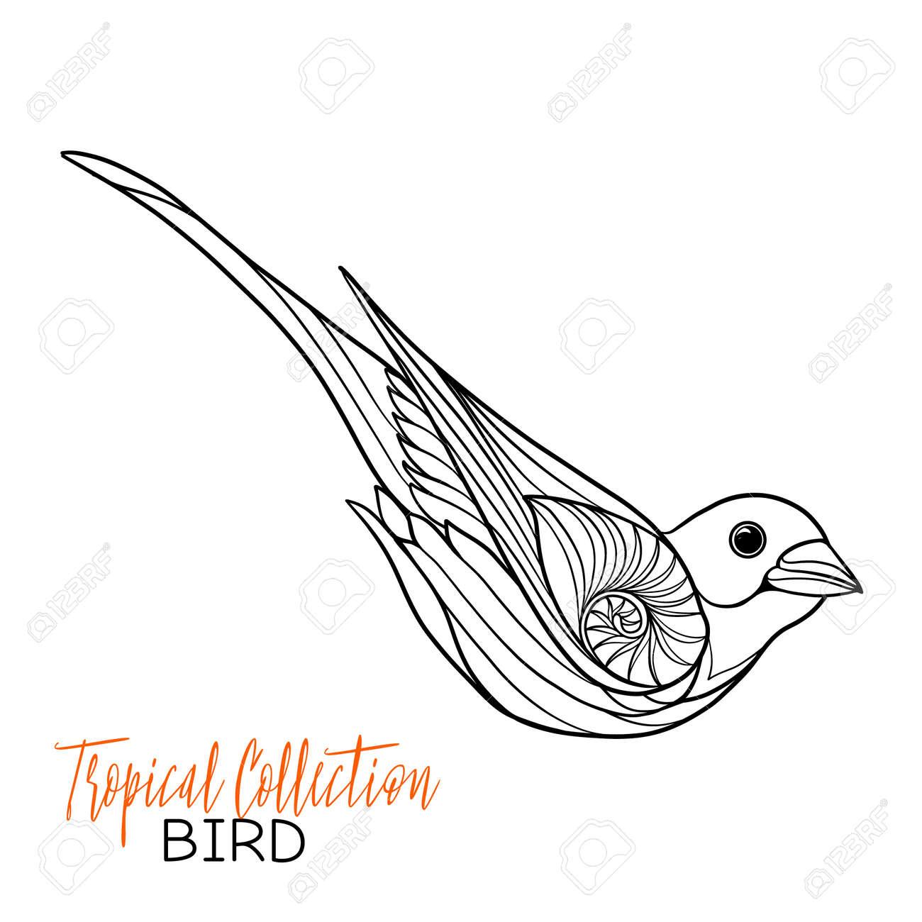 Oiseaux Tropicaux Vector Illustration Livre à Colorier Pour Les Adultes Et Les Enfants Plus âgés Coloriage Dessin Au Trait