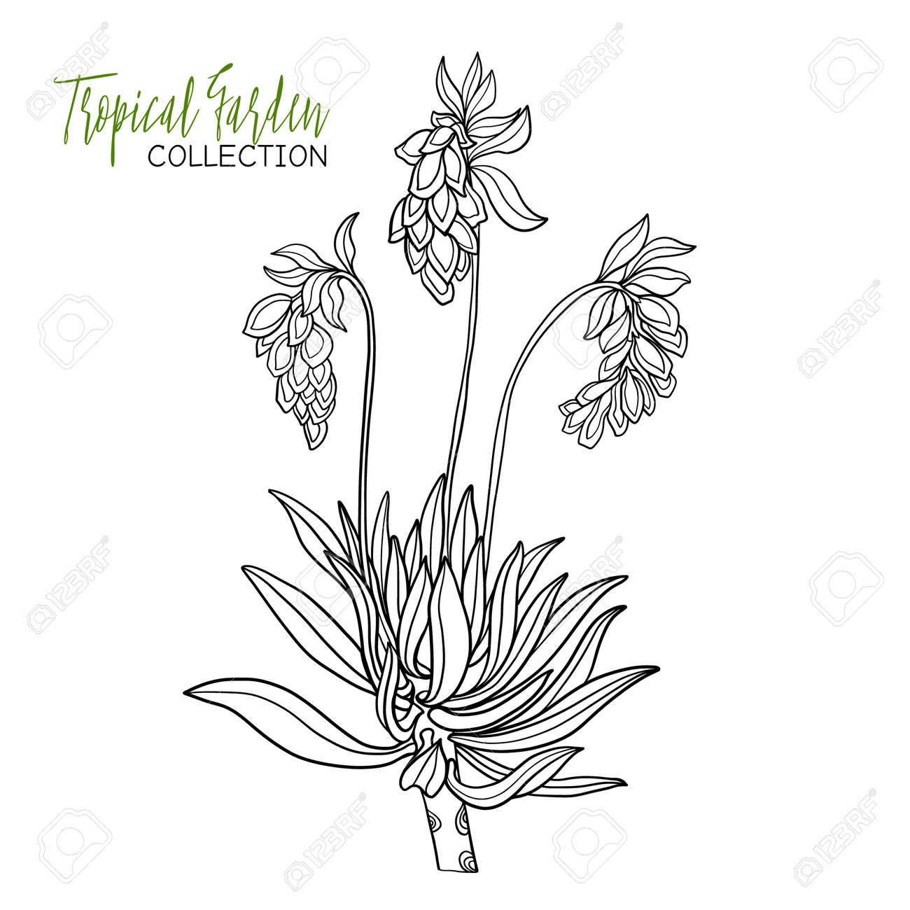 tropical plant vector illustration coloring book for