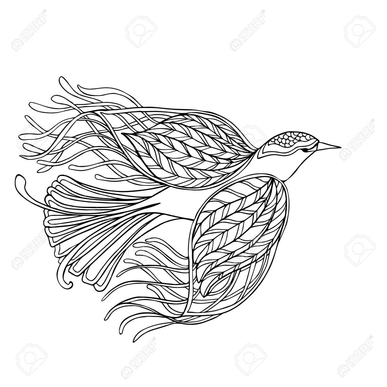 Oiseau Décoratif Livre à Colorier Pour Les Adultes Et Les Enfants Plus âgés Coloriage Dessin Au Trait Vector Illustration